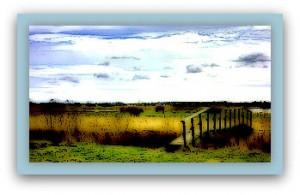 http://www.dreamstime.com/royalty-free-stock-image-meadows-near-skjern-denmark-ringkobing-image30681236
