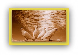 http://www.dreamstime.com/royalty-free-stock-images-doves-image10608429