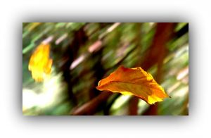 foglie-cadenti-1
